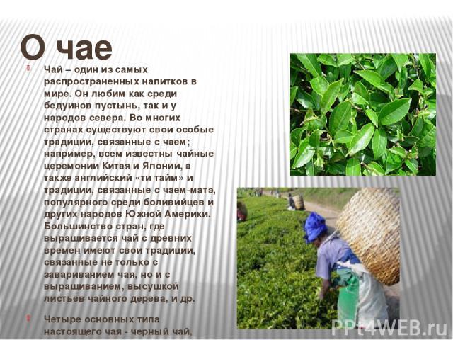 О чае Чай – один из самых распространенных напитков в мире. Он любим как среди бедуинов пустынь, так и у народов севера. Во многих странах существуют свои особые традиции, связанные с чаем; например, всем известны чайные церемонии Китая и Японии, а …