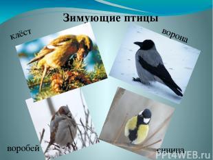Зимующие птицы клёст ворона воробей синица