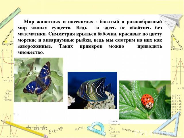 Мир животных и насекомых - богатый и разнообразный мир живых существ. Ведь и здесь не обойтись без математики. Симметрия крыльев бабочки, красивые по цвету морские и аквариумные рыбки, ведь мы смотрим на них как завороженные. Таких примеров можно пр…