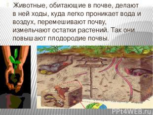 Животные, обитающие в почве, делают в ней ходы, куда легко проникает вода и возд