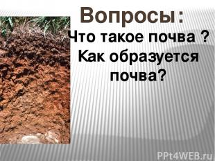Вопросы: Что такое почва ? Как образуется почва?