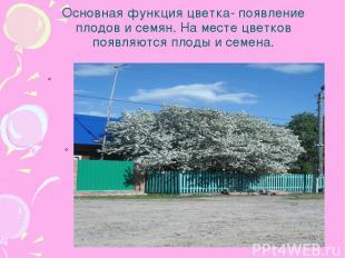 Основная функция цветка- появление плодов и семян. На месте цветков появляются п
