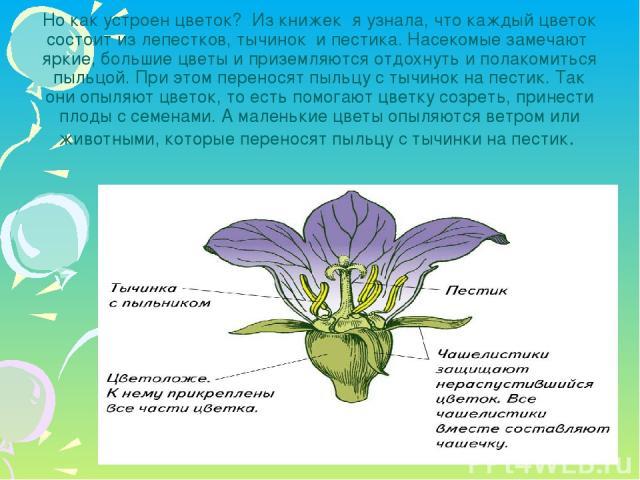 Но как устроен цветок? Из книжек я узнала, что каждый цветок состоит из лепестков, тычинок и пестика. Насекомые замечают яркие, большие цветы и приземляются отдохнуть и полакомиться пыльцой. При этом переносят пыльцу с тычинок на пестик. Так они опы…