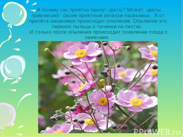 А почему так приятно пахнут цветы? Может цветы привлекают своим приятным запахом насекомых. А от прилёта насекомых происходит опыление. Опыление это перенос пыльцы с тычинки на пестик. И только после опыления происходит появление плода с семенами.