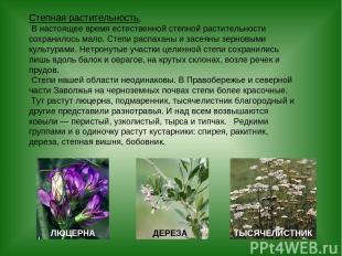 Степная растительность. В настоящее время естественной степной растительности со