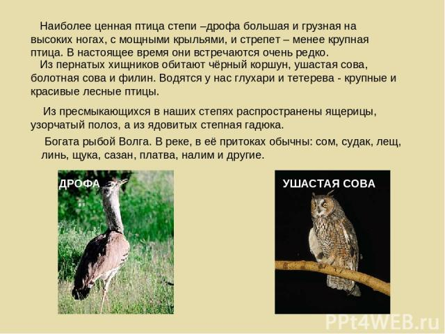 Из пернатых хищников обитают чёрный коршун, ушастая сова, болотная сова и филин. Водятся у нас глухари и тетерева - крупные и красивые лесные птицы. Из пресмыкающихся в наших степях распространены ящерицы, узорчатый полоз, а из ядовитых степная гадю…