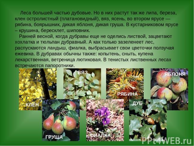 Леса большей частью дубовые. Но в них растут так же липа, береза, клен остролистный (платановидный), вяз, ясень, во втором ярусе — рябина, боярышник, дикая яблоня, дикая груша. В кустарниковом ярусе – крушина, бересклет, шиповник. Ранней весной, ког…