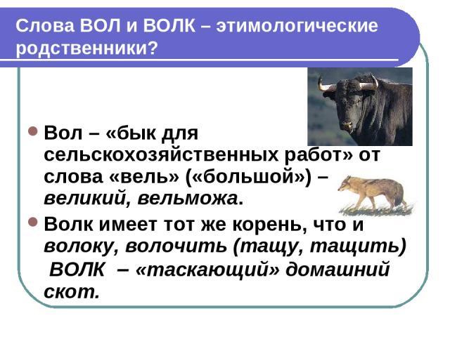 Слова ВОЛ и ВОЛК – этимологические родственники? Вол – «бык для сельскохозяйственных работ» от слова «вель» («большой») – великий, вельможа. Волк имеет тот же корень, что и волоку, волочить (тащу, тащить) ВОЛК – «таскающий» домашний скот.