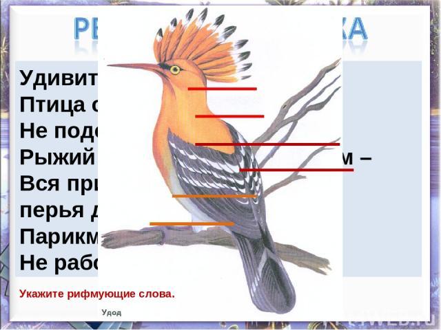 Удивительный народ – Птица с именем удод. Не подстрижен, не причёсан, Рыжий клок торчит под носом – Вся причёска на весу, перья даже на носу. Парикмахерская, видно, Не работает в лесу. Укажите рифмующие слова.