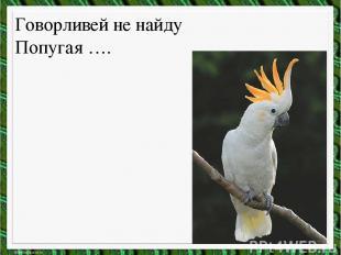 Говорливей не найду Попугая ….