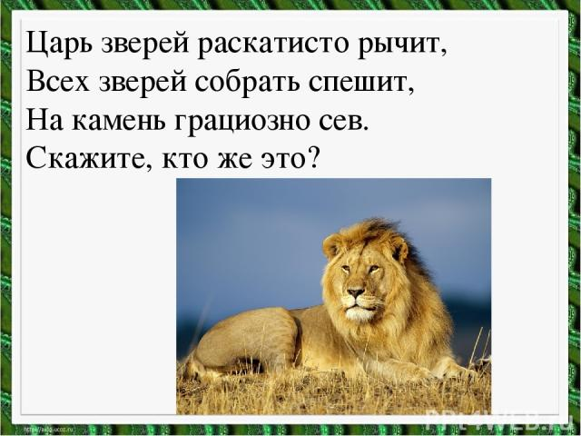 Царь зверей раскатисто рычит, Всех зверей собрать спешит, На камень грациозно сев. Скажите, кто же это?