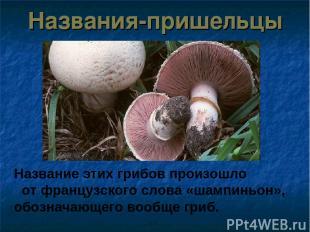 Названия-пришельцы Название этих грибов произошло от французского слова «шампинь