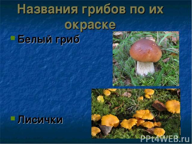 Названия грибов по их окраске Белый гриб Лисички