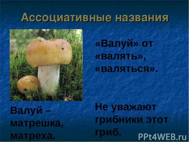 Ассоциативные названия «Валуй» от «валять», «валяться». Не уважают грибники этот гриб. Валуй –матрешка, матреха.
