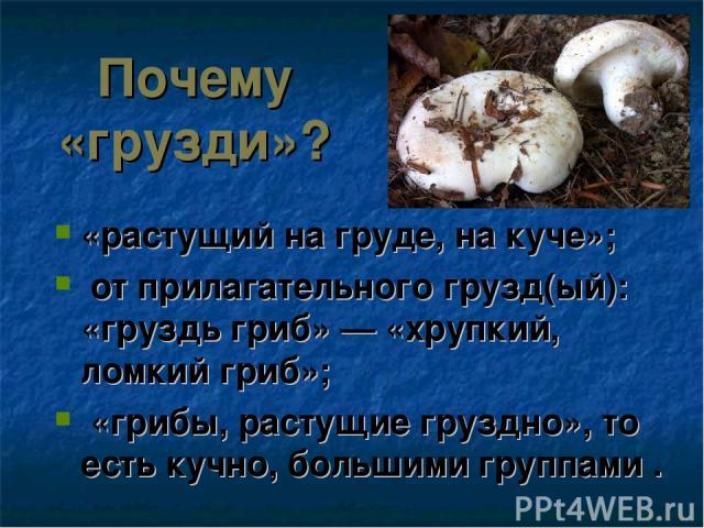 Почему «грузди»? «растущий на груде, на куче»; от прилагательного грузд(ый): «груздь гриб» — «хрупкий, ломкий гриб»; «грибы, растущие груздно», то есть кучно, большими группами .