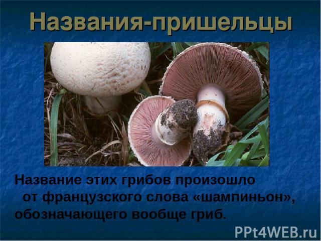 Названия-пришельцы Название этих грибов произошло от французского слова «шампиньон», обозначающего вообще гриб.