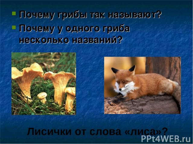 Почему грибы так называют? Почему у одного гриба несколько названий? Лисички от слова «лиса»?