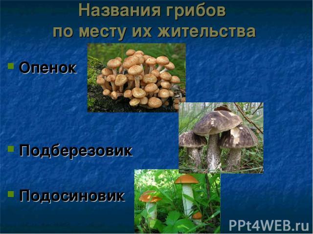 Названия грибов по месту их жительства Опенок Подберезовик Подосиновик