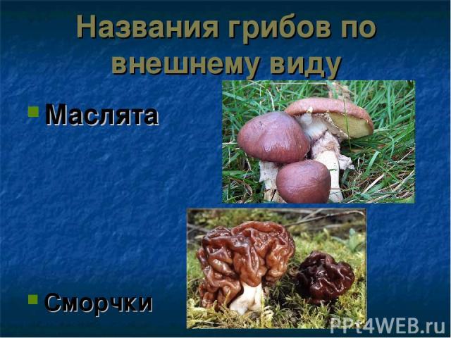 Названия грибов по внешнему виду Маслята Сморчки