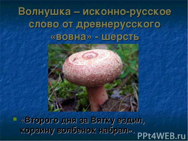 Волнушка – исконно-русское слово от древнерусского «вовна» - шерсть «Второго дня за Вятку ездил, корзину волбенок набрал».
