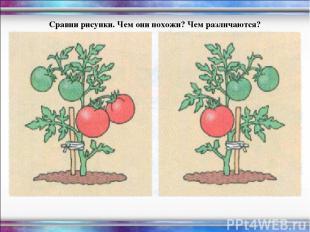 Сравни рисунки. Чем они похожи? Чем различаются?