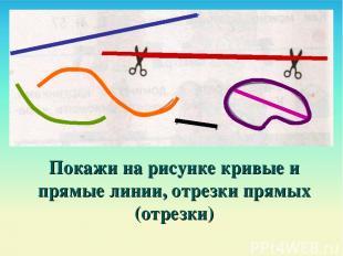 Покажи на рисунке кривые и прямые линии, отрезки прямых (отрезки)