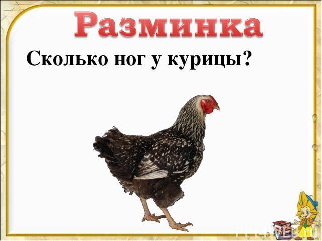 Сколько ног у курицы?