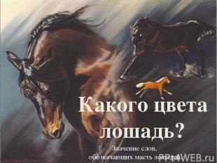 Какого цвета лошадь? Значение слов, обозначающих масть лошадей.