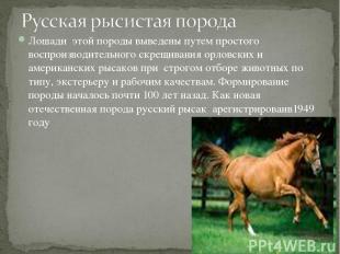 Лошади этой породы выведены путем простого воспроизводительного скрещивания орло