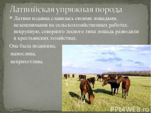 Латвия издавна славилась своими лошадьми, незаменимыми на сельскохозяйственных р