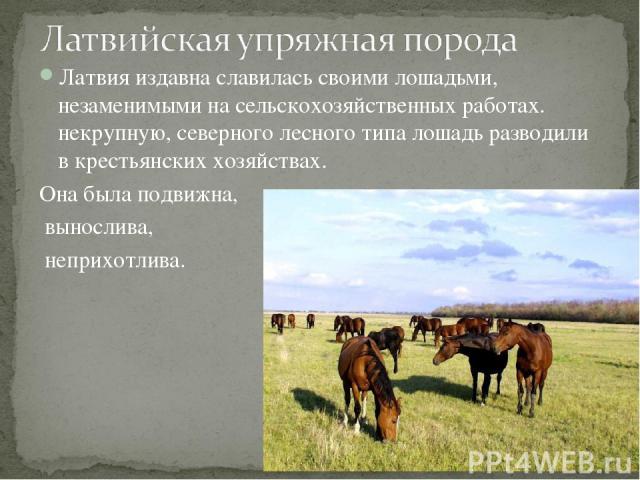 Латвия издавна славилась своими лошадьми, незаменимыми на сельскохозяйственных работах. некрупную, северного лесного типа лошадь разводили в крестьянских хозяйствах. Она была подвижна, вынослива, неприхотлива.