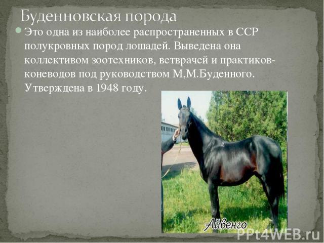 Это одна из наиболее распространенных в ССР полукровных пород лошадей. Выведена она коллективом зоотехников, ветврачей и практиков-коневодов под руководством М,М.Буденного. Утверждена в 1948 году.