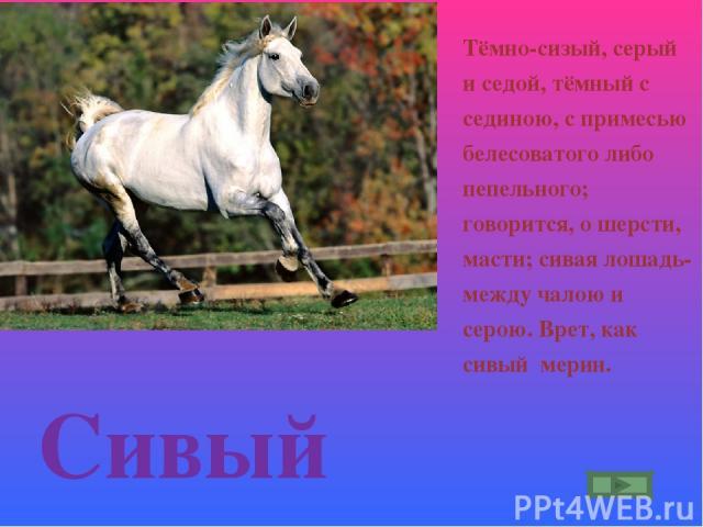 Сивый Тёмно-сизый, серый и седой, тёмный с сединою, с примесью белесоватого либо пепельного; говорится, о шерсти, масти; сивая лошадь- между чалою и серою. Врет, как сивый мерин.
