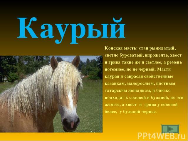 Каурый Конская масть: стан рыжеватый, светло буроватый, впрожелть, хвост и грива такие же и светлее, а ремень потемнее, но не черный. Масти каурая и саврасая свойственные казанкам, малорослым, плотным татарским лошадкам, и близко подходят к соловой …