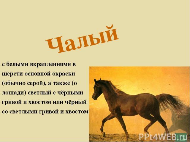 Чалый с белыми вкраплениями в шерсти основной окраски (обычно серой), а также (о лошади) светлый с чёрными гривой и хвостом или чёрный со светлыми гривой и хвостом.