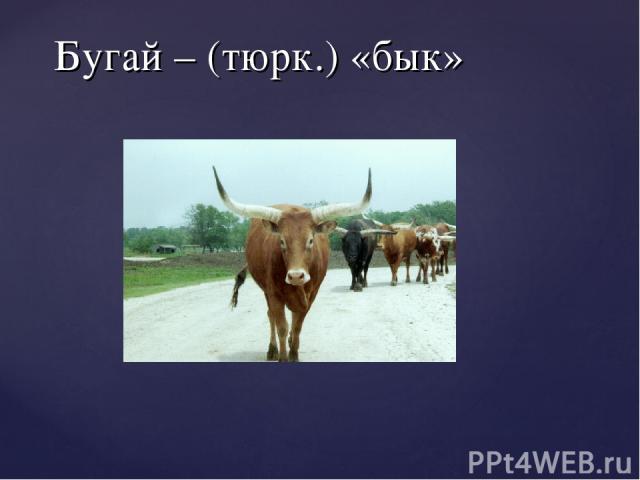 Бугай – (тюрк.) «бык»