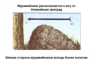 Муравейники располагаются к югу от ближайших преград Южная сторона муравейников