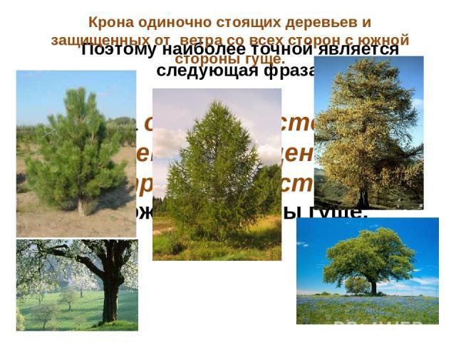 Поэтому наиболее точной является следующая фраза: Крона одиночно стоящих деревьев и защищенных от ветра со всех сторон с южной стороны гуще. Крона одиночно стоящих деревьев и защищенных от ветра со всех сторон с южной стороны гуще.