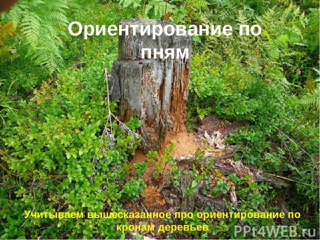 Ориентирование по пням Учитываем вышесказанное про ориентирование по кронам деревьев