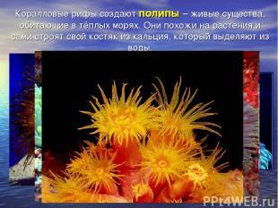 Коралловые рифы создают полипы – живые существа, обитающие в тёплых морях. Они п
