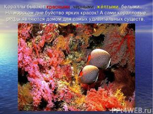 Кораллы бывают красными, чёрными, жёлтыми, белыми… . На морском дне буйство ярки