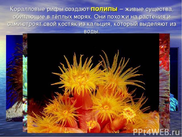 Коралловые рифы создают полипы – живые существа, обитающие в тёплых морях. Они похожи на растения и сами строят свой костяк из кальция, который выделяют из воды.