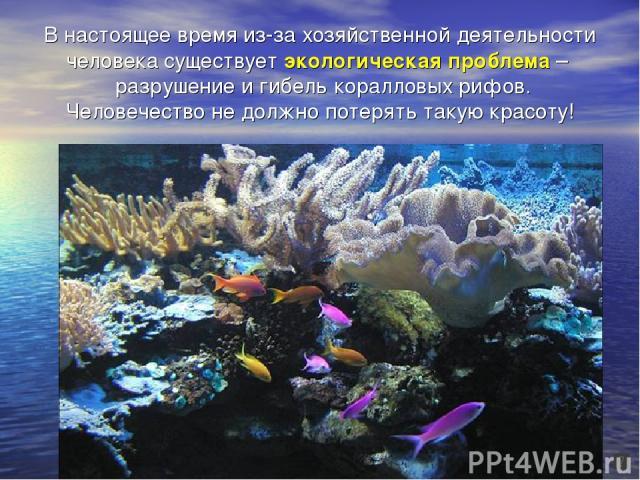 В настоящее время из-за хозяйственной деятельности человека существует экологическая проблема – разрушение и гибель коралловых рифов. Человечество не должно потерять такую красоту!