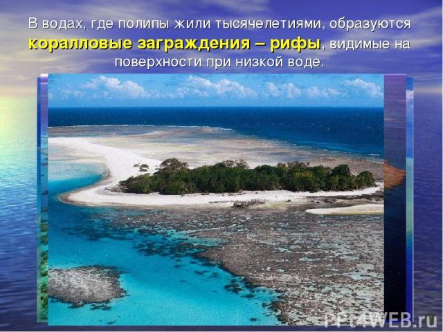 В водах, где полипы жили тысячелетиями, образуются коралловые заграждения – рифы, видимые на поверхности при низкой воде.