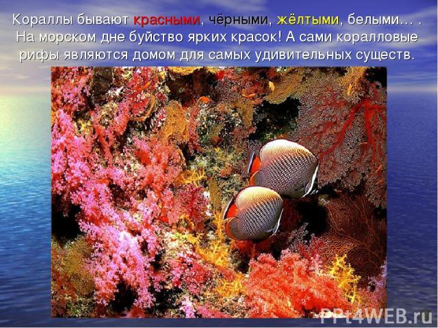 Кораллы бывают красными, чёрными, жёлтыми, белыми… . На морском дне буйство ярких красок! А сами коралловые рифы являются домом для самых удивительных существ.