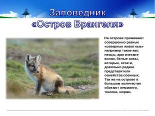 На острове проживают совершенно разные «северные животные» например такие как: п