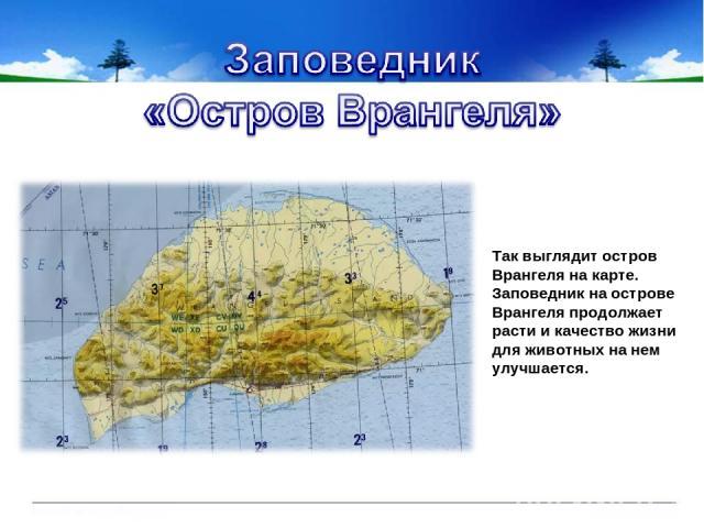 Так выглядит остров Врангеля на карте. Заповедник на острове Врангеля продолжает расти и качество жизни для животных на нем улучшается.