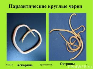 Паразитические круглые черви Аскарида Острицы * Братякова С.Б. * Братякова С.Б.