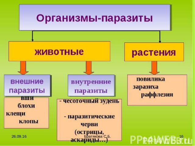 * Братякова С.Б. * Братякова С.Б.