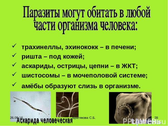 трахинеллы, эхинококк – в печени; ришта – под кожей; аскариды, острицы, цепни – в ЖКТ; шистосомы – в мочеполовой системе; амёбы образуют слизь в организме. * Братякова С.Б. * Братякова С.Б.